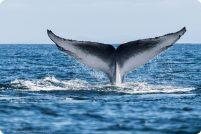 Самые большие животные планеты