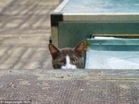 Кошки на улицах Стамбула