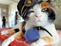 Кошка Тама — начальник железнодорожной станции