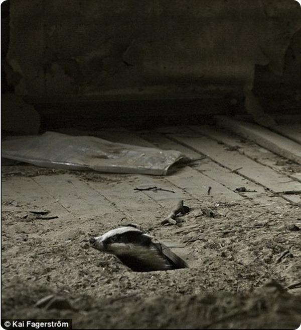 Новые обитатели заброшенного дома