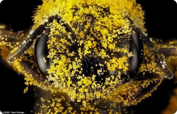 Удивительные насекомые от Сэма Дроге