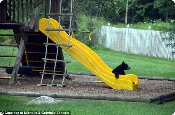 Медвежье семейство посетило жилой дом в Нью-Джерси