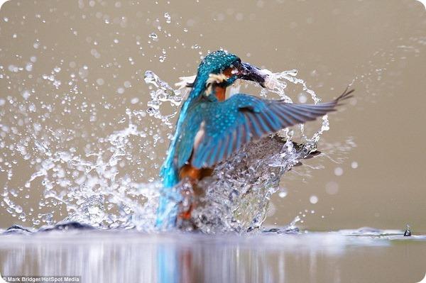 Король рыбной ловли
