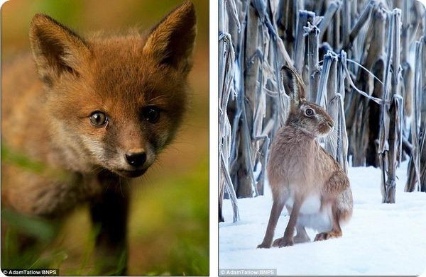 Удивительный животный мир от Адама Татлоу