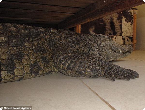 Крокодил под кроватью