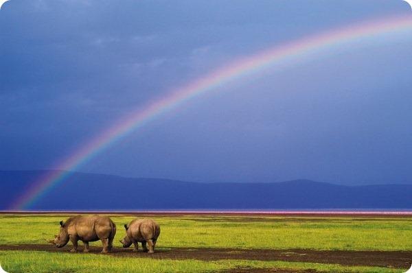 Дикая Африка глазами фотографа Алекса Бернаскони
