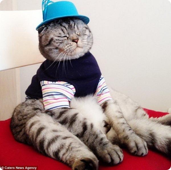 Кот Ники любит сидеть как человек