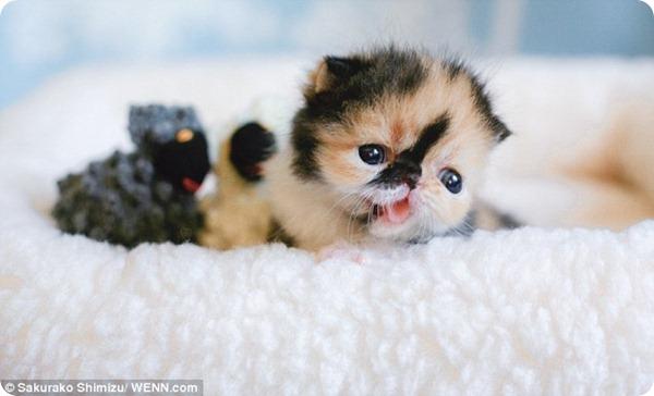 Забавный котенок Мемебон