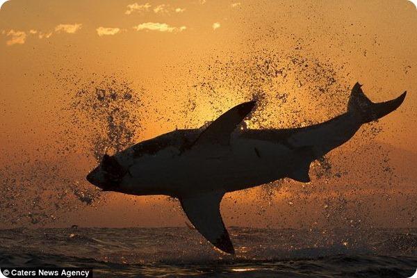 Акулий полет