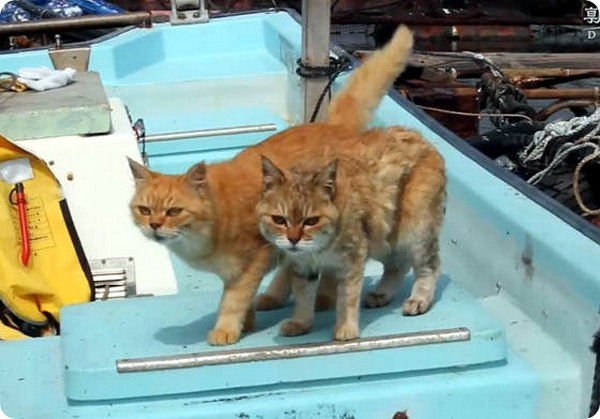 Уважаемые кошки с рыбной фермы в Японии