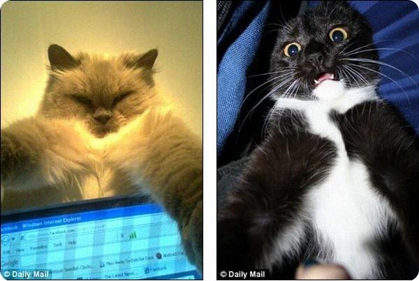 Автофотопортреты котов и кошек