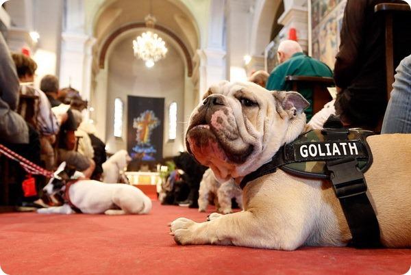 В католических странах прошли мессы для животных