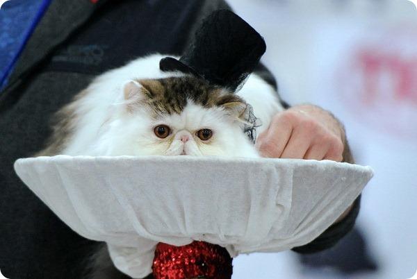 В Нью-Йорке прошла неделя моды для кошек и собак