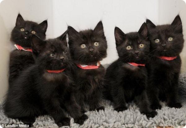 Брошенным котятам дали звездные имена