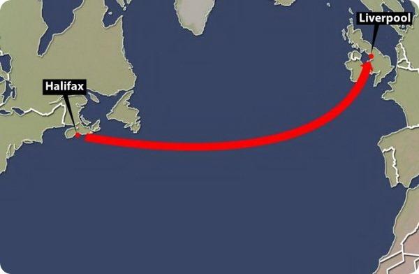 Самка енота выжила вовремя морского путешествия