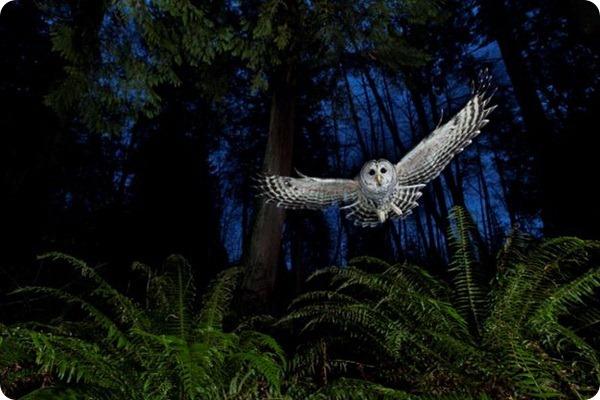 Лучшие фотографии конкурса «Дикая природа-2013»
