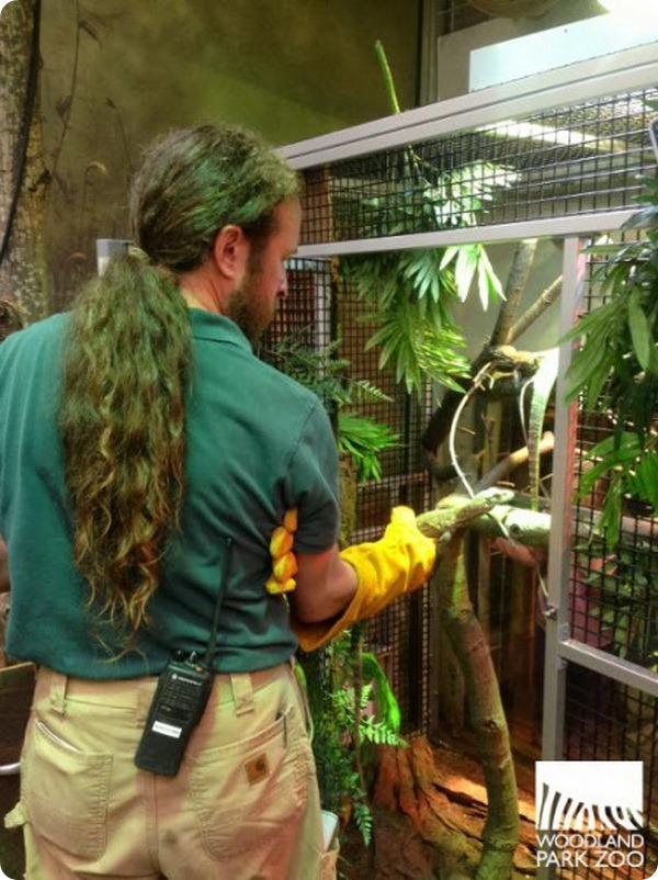 Юные комодские вараны из зоопарка Woodland Park