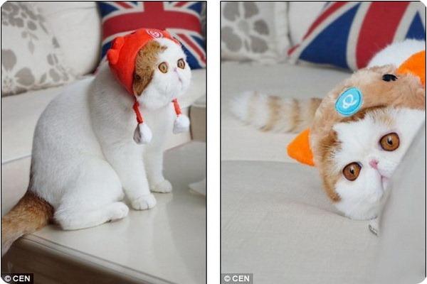 Забавный кот Снупи