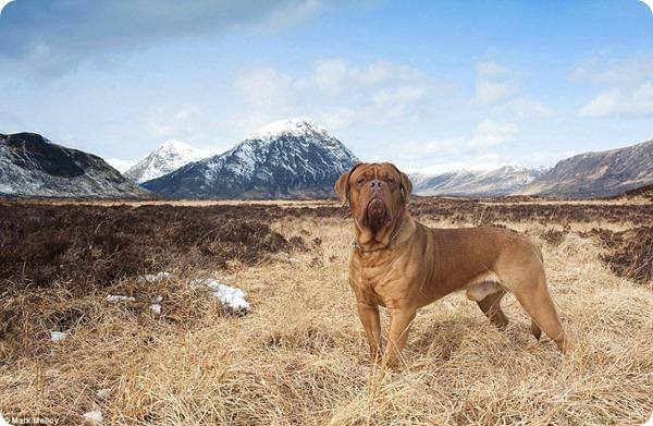 Лучшие собачьи фотографии 2013 года