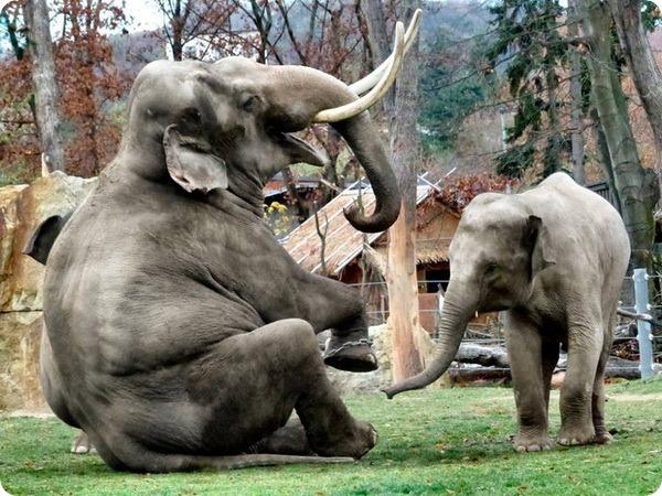 Азиатские слоны из зоопарка Праги