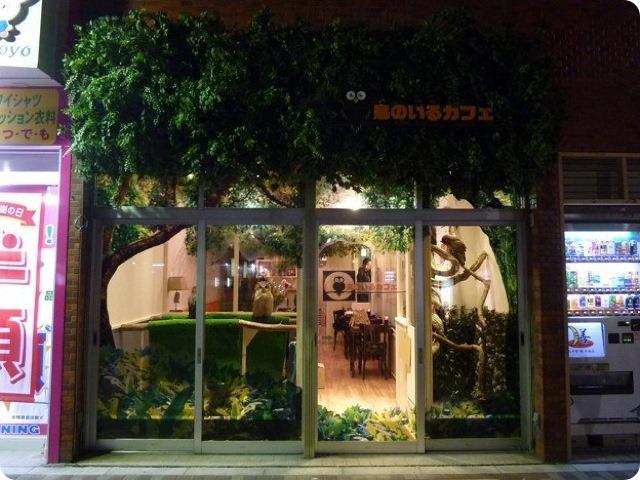 В Японии открылось совиное кафе