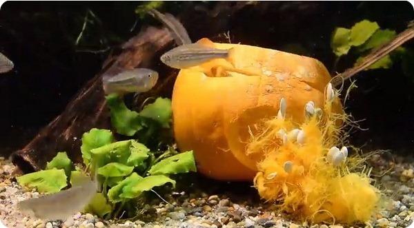 Животные зоопарка Честера отпраздновали Хэллоуин