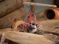 Смешные сурикаты из Paradise Wildlife Park