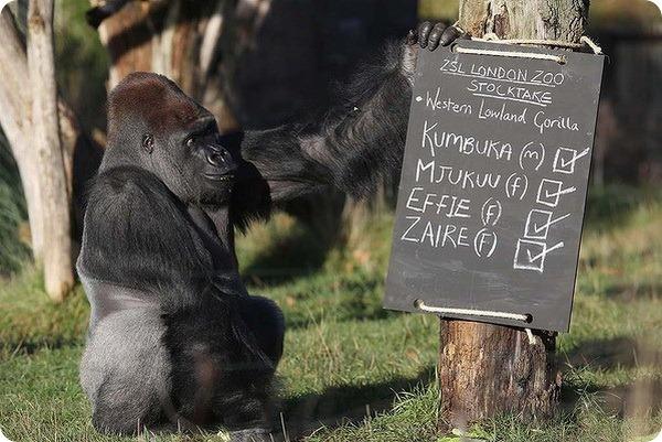 В зоопарке Лондона стартовала перепись животных
