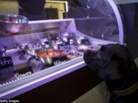 Берлинский ресторан для кошек и собак