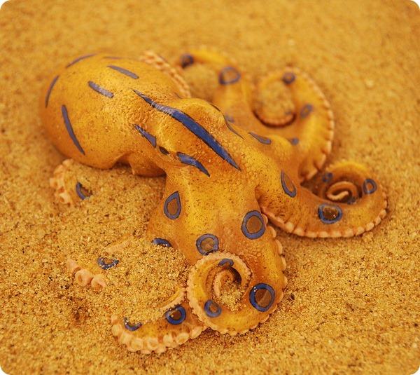 Синекольчатые осьминоги (лат. Hapalochlaena)
