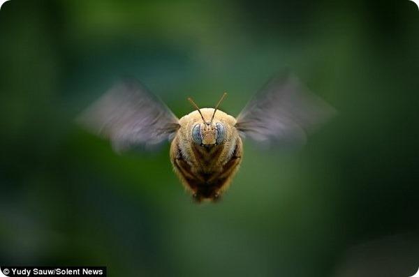 Макрофотографии насекомых от Юди Сау