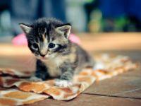Советы при выборе котенка