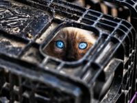 Потерялась кошка! Что делать?