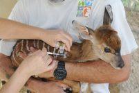 Детеныш ньялы прошел первую вакцинацию