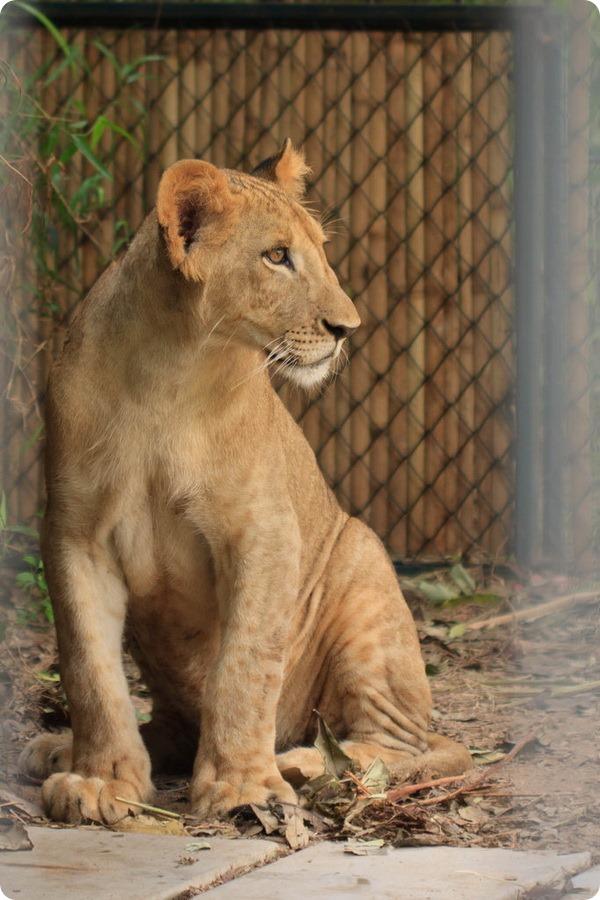 Зоопарк «Aquarium and Tiger Zoo» на Самуи