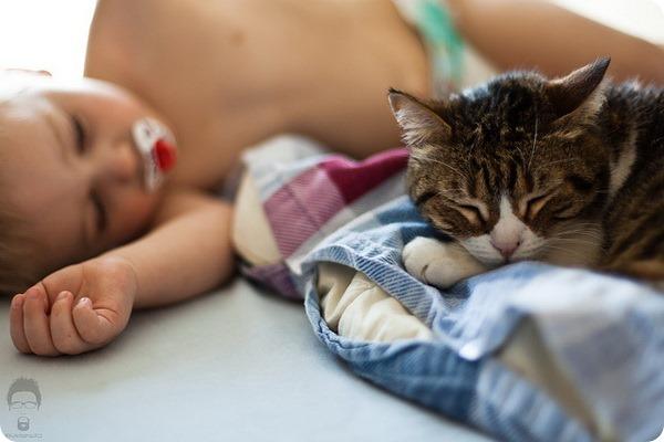 Как долго, сколько живут кошки?