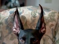 Как собака слышит?