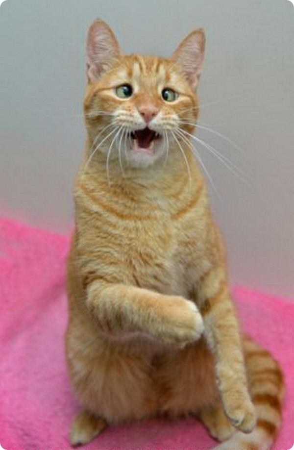 Косоглазый чудо-кот Джарвис