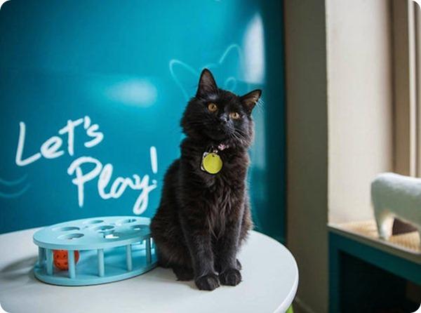 В США открылось экспериментальное кошачье кафе