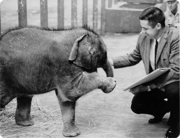 Слону Паки из зоопарка Орегона исполнилось 52 года!