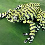 Тигровая древесная лягушка