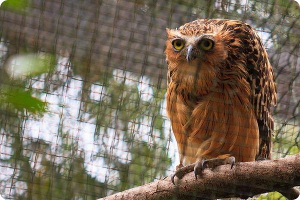 Зоопарк «Zoo Negara»
