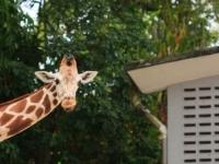 «Zoo Negara» — Национальный зоопарк Куала-Лумпура
