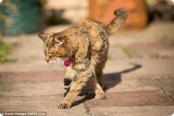 Поппи – самая старая кошка в мире