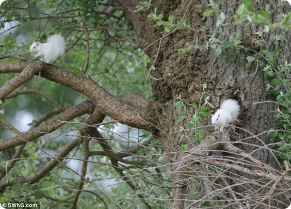 Белки-альбиносы из Джубили-Парка