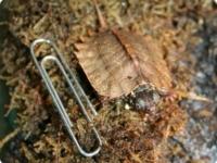 Листовидная черепашка из Детского зоопарка Форт-Уэйна