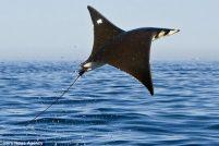 Летающий морской дьявол от Пэт и Синди Бониш