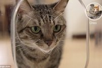 Bistro — Заботливый гаджет для кошек