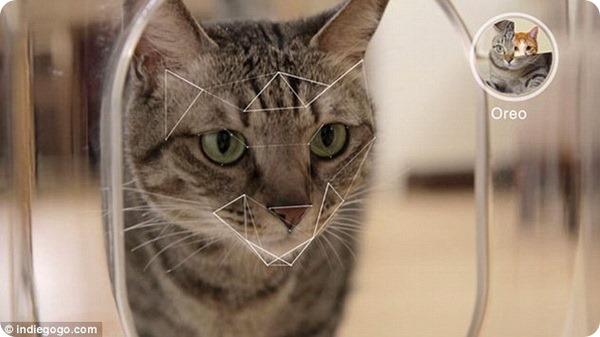 Заботливый гаджет для кошек