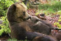Медведица с медвежонком от фотографа Стефана Мейерса